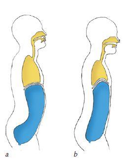 Ryc. 1. źródło: Kaminoff L., Matthews A.: Yoga Anatomy. 2nd. Ed., Human Kinetics. a) wdech, b) wydech